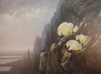 Michael Coleman In the Cliffs - Rocky Mountain Goats