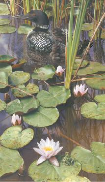 Carl Brenders In The Swim Of Things - Loon