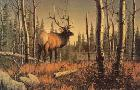 Gary Sorrels Into the Clearing - Elk