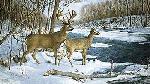 Ron Van Gilder Jordan Buck - Deer