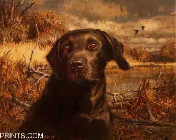 Robert Abbett Labrador Retriever 1982 American Sporting Dog Heritage