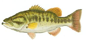 Flick Ford Largemouth Bass Signed Open Edition Giclee on Paper