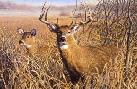 Robert Hautman Last Look - Whitetail Deer