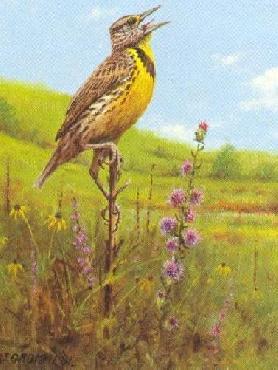 Owen Gromme Late Summer - Meadowlark