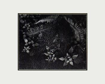 Ansel Adams Leaves, Mills College LG Matted