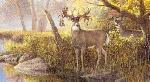 Ron Van Gilder Legends - Hole in the Horn Buck