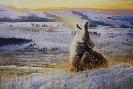 Nancy Glazier Lonesome Coyote
