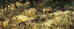 Stephen Lyman Long Autumn - Mountain Sheep