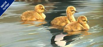 Mario Fernandez Loves Reflection - Young Canada Geese Print #1/98 Artist