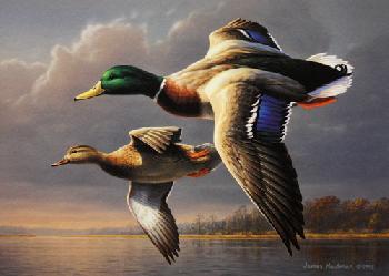 Jim Hautman Mallards 1995 Federal Duck Stamp Print Collector Editoin