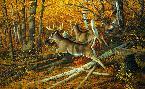Michael Sieve Maple Rush - Whitetail Deer