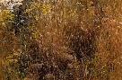 Robert Bateman Marginal Meadow