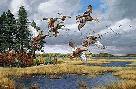 David Maass Merrymeeting Bay - Black Ducks