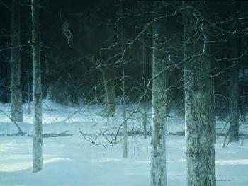Robert Bateman Midnight Black Wolf