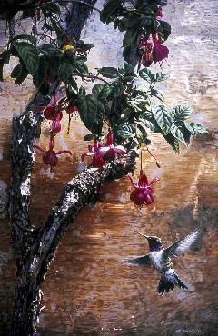 Terry Isaac The Mission Wall Black Chinned Hummingbird
