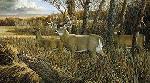 Ron Van Gilder Missouri Giant - Record Deer