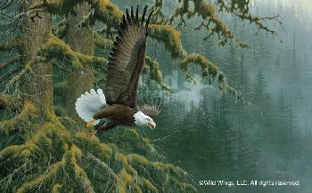 Michael Sieve Misty Forest - Bald Eagle Artist