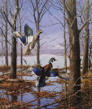 David Maass Misty Morning Revisited - Wood Ducks Artist