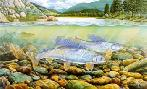 Monte Dolack Montana Grayling