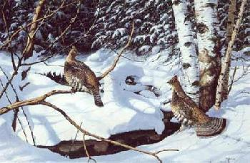 David Maass Morning Shadows - Ruffed Grouse