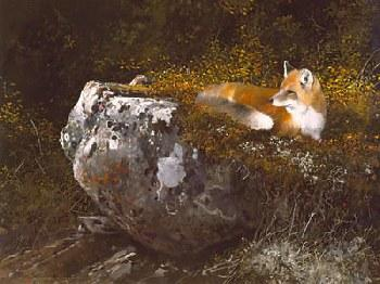Michael Coleman Morning Sun - Red Fox Giclee on Canvas
