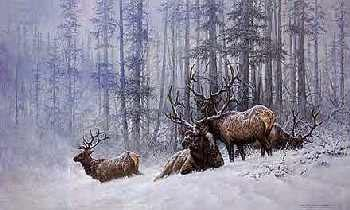 Larry Fanning Mountain Majesty - Bull Elk
