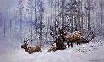 Larry Fanning Mountain Majesty - Bull Elk