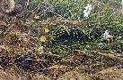 Robert Bateman Mowed Meadow