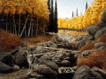 Rock Newcomb Nature