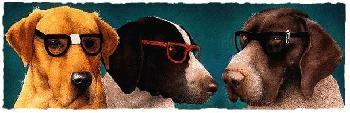 Will Bullas Nerd Dogs