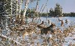 Michael Sieve Northern Pursuit - Wolves
