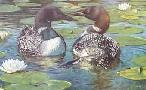 Brian Jarvi Northern Romance Loons