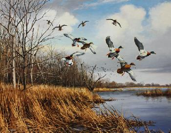 David Maass North Shore - Buffalo Lake Mallards Artist