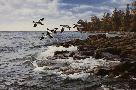 David Maass North Shore - Goldeneyes
