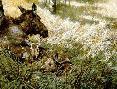 John Seerey-Lester Northwoods Family Moose