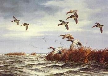 David Maass November Winds Canvasbacks Artist
