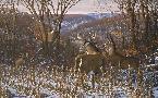Michael Sieve Oak Ridge Challenge - Whitetail Deer