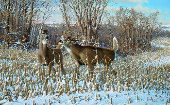 Michael Sieve Oak Ridge Monarch - Whitetail Deer