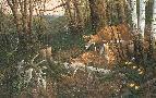Michael Sieve Oak Ridge Renewal - Whitetail Deer