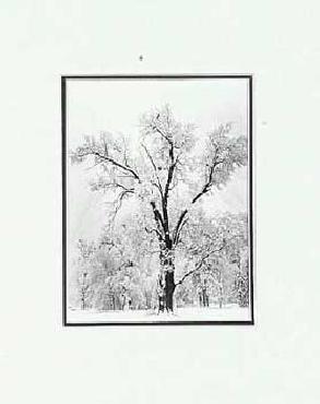 Ansel Adams Oak Tree, Snowstorm SM Matted