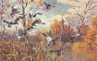 Harry Curieux Adamson October Interlude Mallards