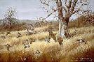 Maynard Reece Old Tree Bobwhites
