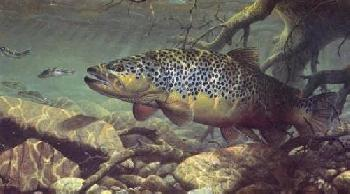 Mark Susinno On Target - Brown Trout