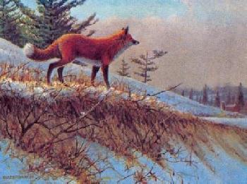 Owen Gromme On the Alert - Red Fox Artist