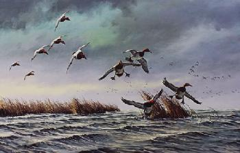 David Maass On the Move - Canvasbacks Remarque