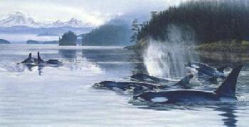 Lee Kromschroeder Orcas Island - Killer Whales