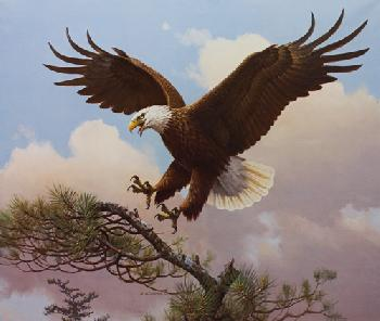 Owen Gromme Our National Bird - Bald Eagle Artist