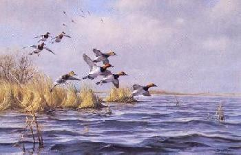 Gary Moss Over the North Point - Canvasbacks Artist