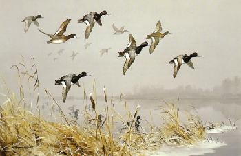 Maynard Reece Over the Point - Lesser Scaup