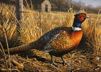 Jim Hautman Pheasant 1994 Minnesota Pheasant Habitat Stamp Print